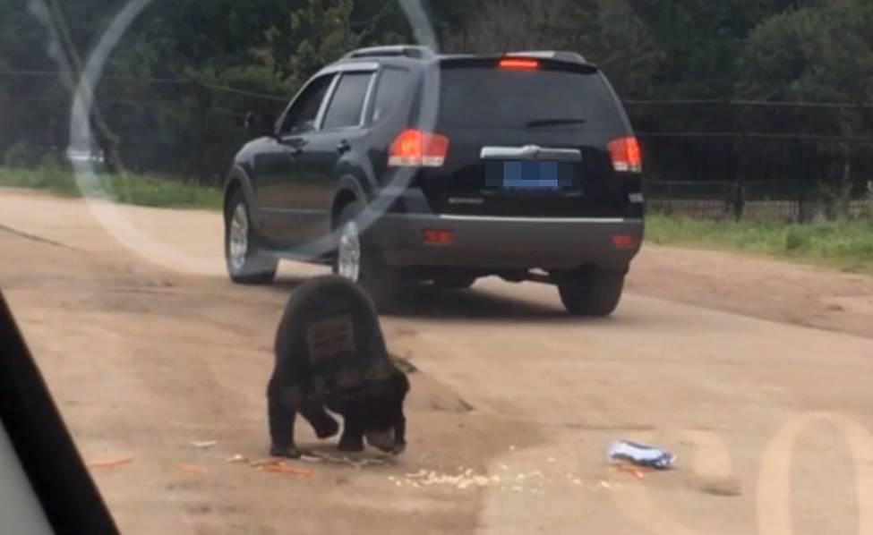 八达岭野生动物园游客投食遭熊扒窗