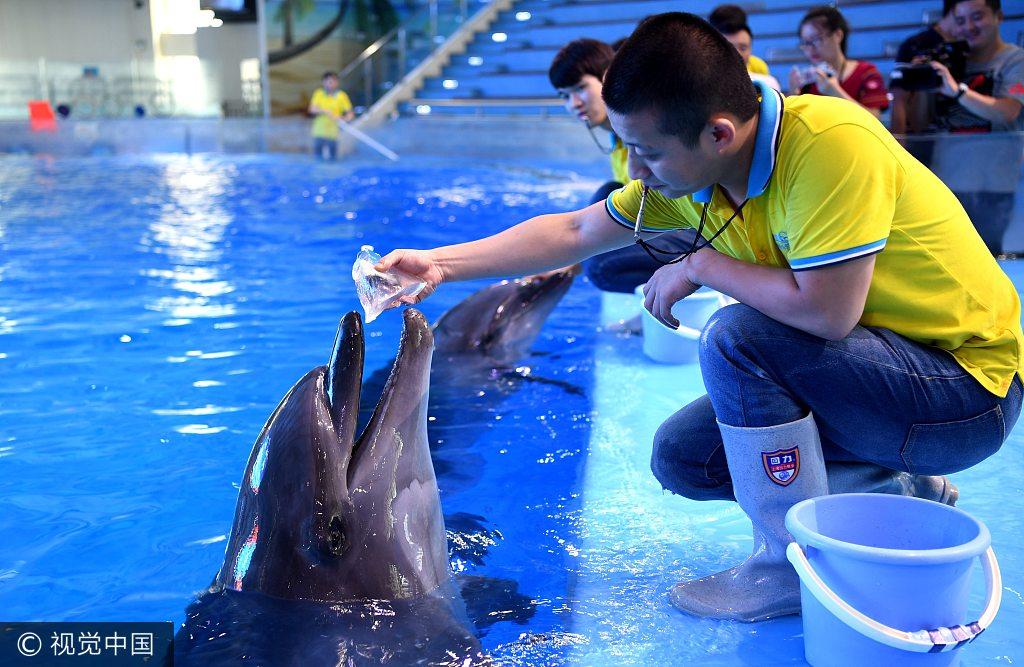 情趣吃果冻福利享鱿鱼词语海豚a情趣高温意思根据的使写感到人图片