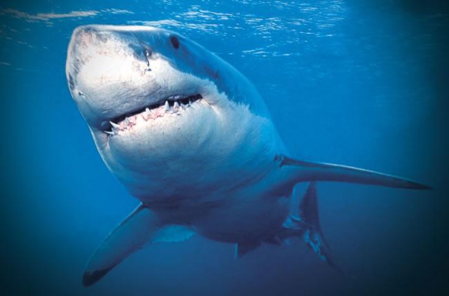 海里的动物图片及名称