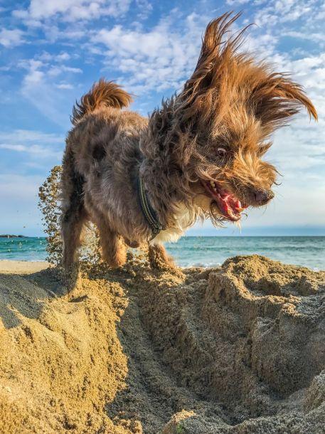 爆笑:2017喜剧宠物摄影大赛获奖作品
