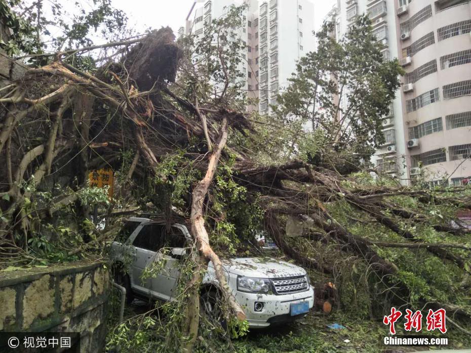 台风过境 广东珠海大树倒塌砸坏轿车