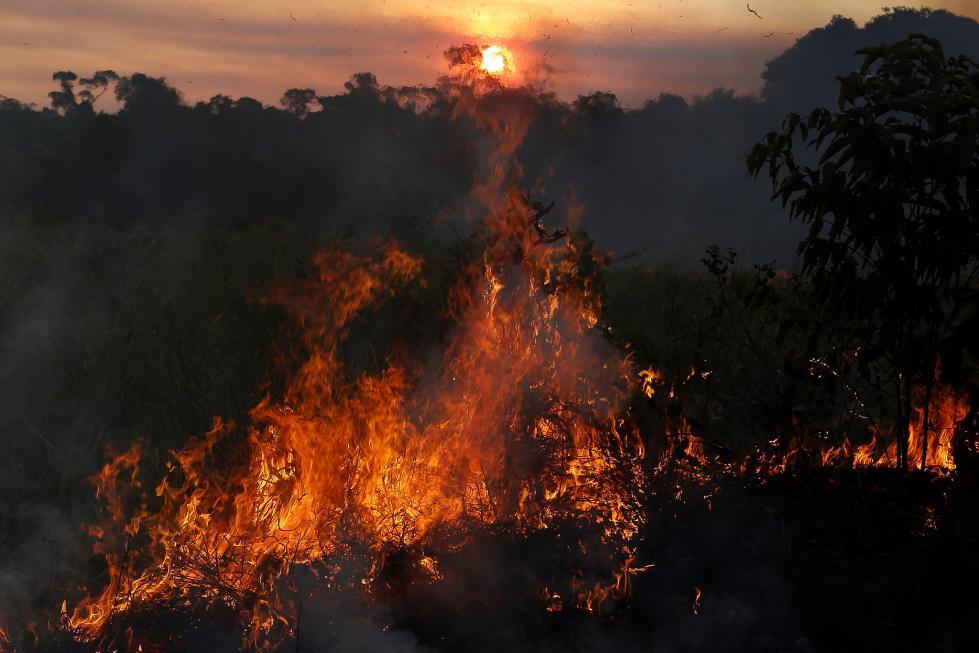 亚马逊森林现砍伐危机 近期火灾频发
