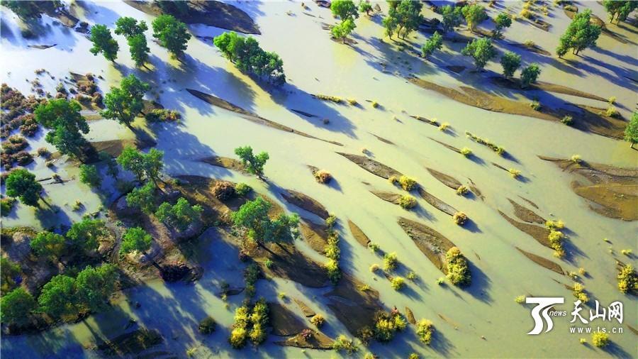 航拍新疆塔里木河尉犁县段,新疆初秋的色彩斑斓引人入胜