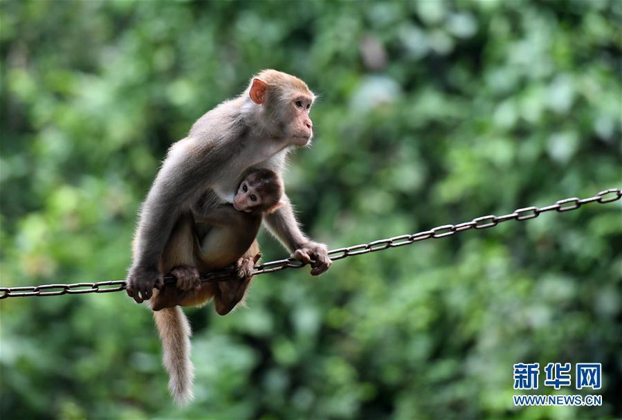 中国猴子种类_山清水秀猴子乐_图片频道__中国青年网