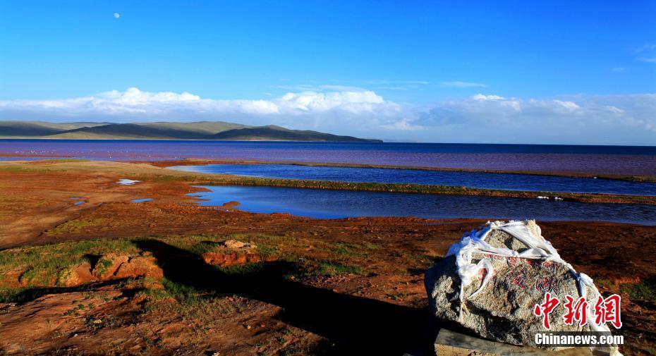 黄河源头秋景如画 野生动物频出现