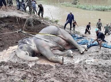 大象坠河 村民花15小时拉上岸