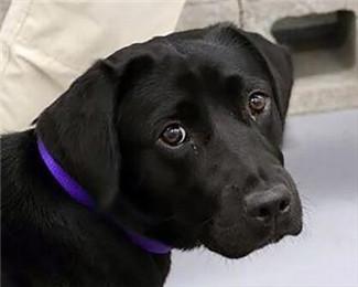 狗狗拒绝工作被CIA开除