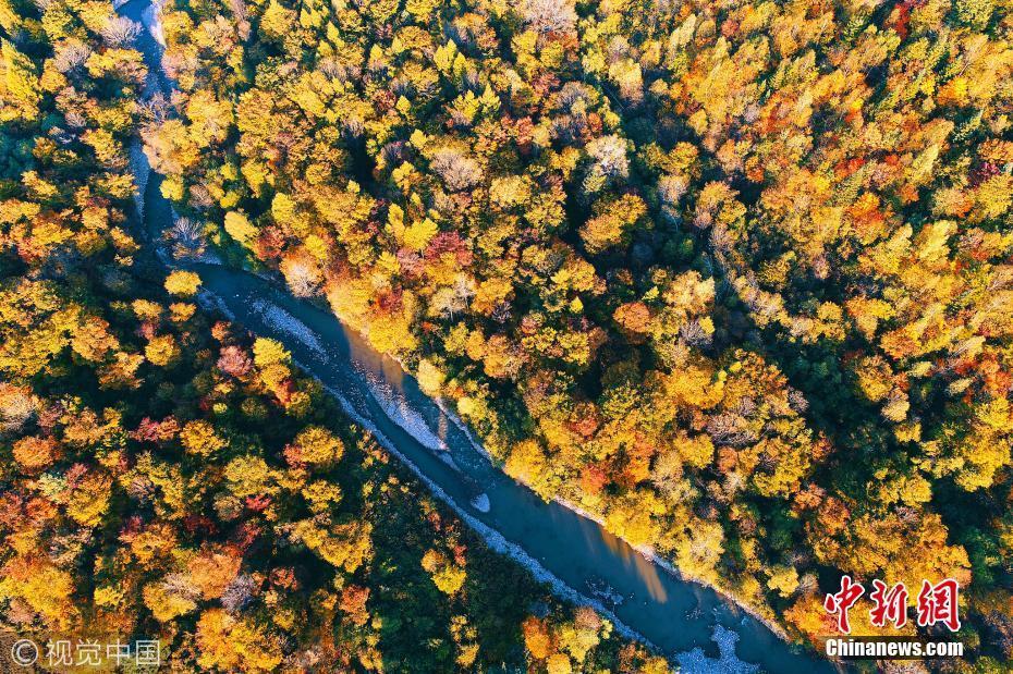 近日,吉林省长白山林区,老白山风景区茂密秋季森林林海,五彩山林风景.