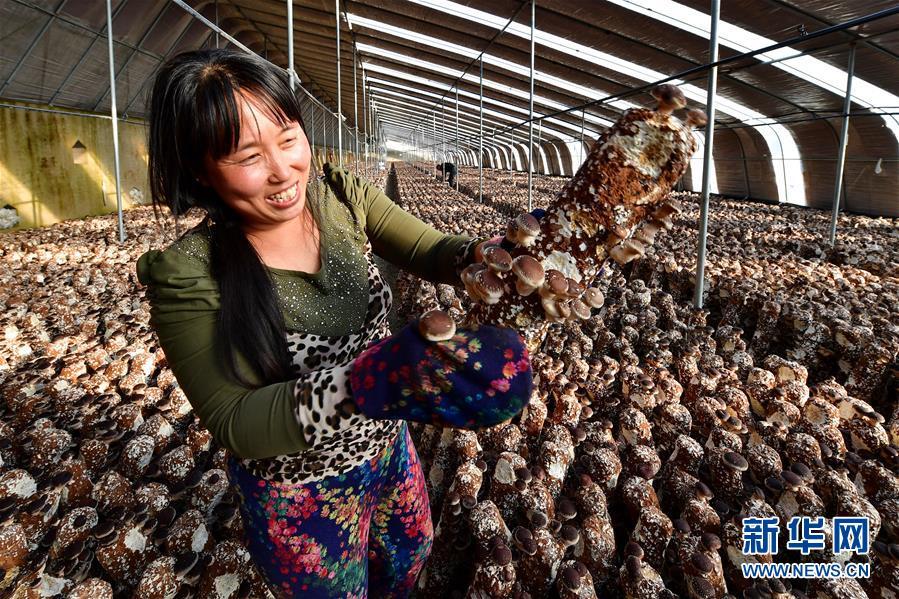 (经济)(1)河北遵化:特色种植富农家