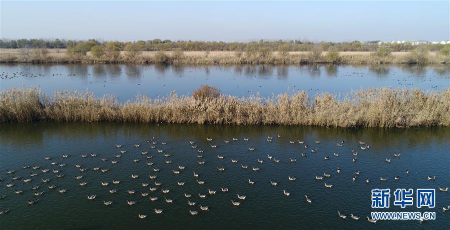 (环境)(1)鸟舞衡水湖