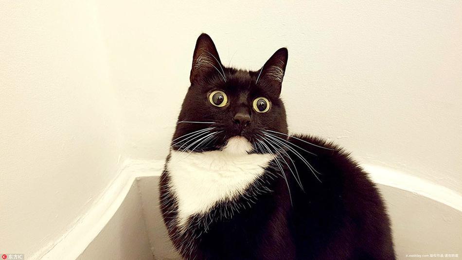 小黑猫靠铜铃大眼爆红网络 好奇表情包俘获千万粉丝