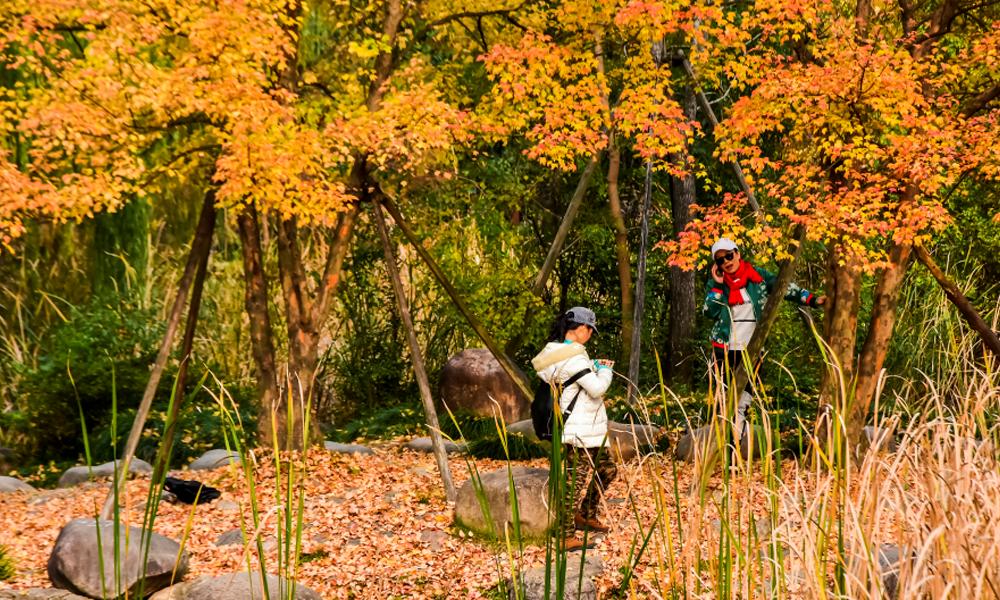 生态公园-美景如画.png