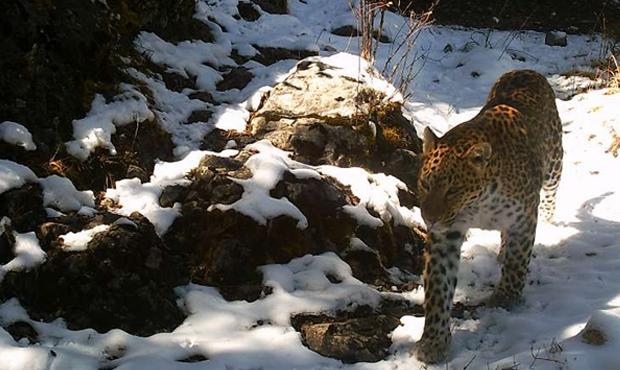 钱豹重要栖息地.png