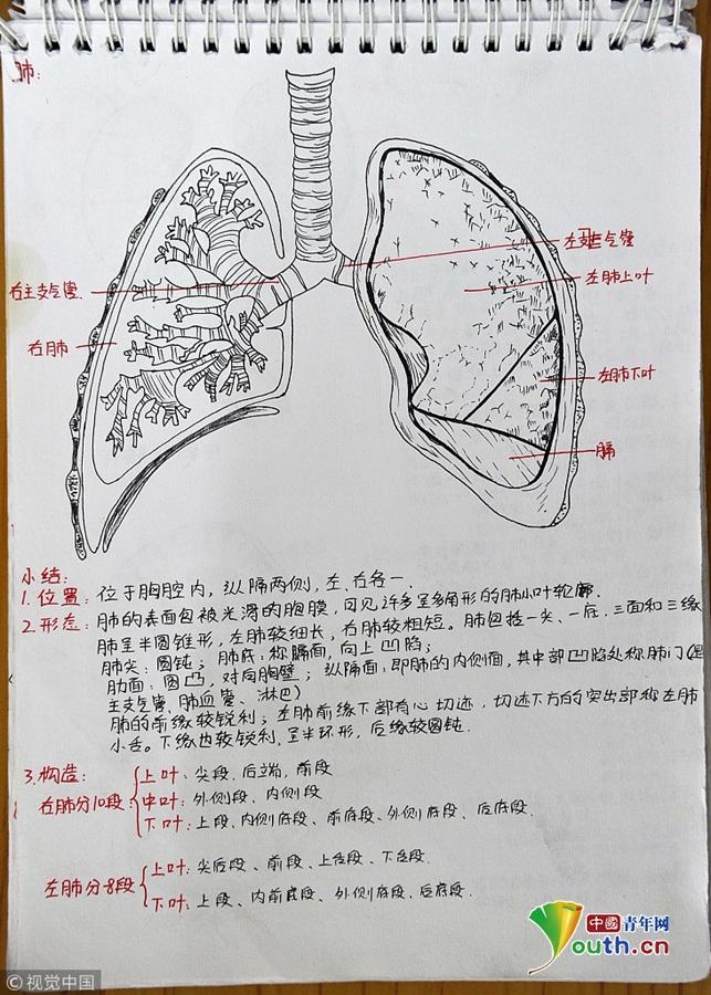 """西安大二女生手绘""""高颜值""""医学笔记走红网络"""