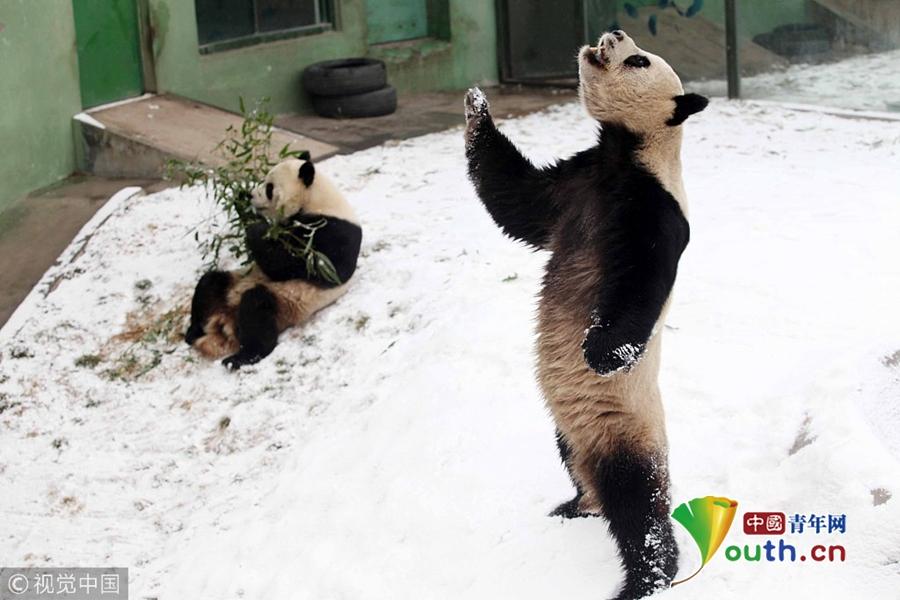 在这冰天雪之中,各种小动物们或呆萌可爱,或调皮搞笑.
