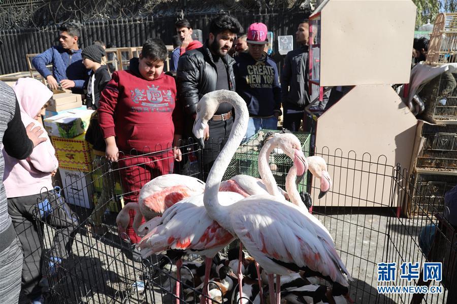 (国际)(3)重新热闹起来的巴格达宠物市场