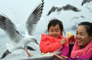 红嘴鸥与游人互动.png
