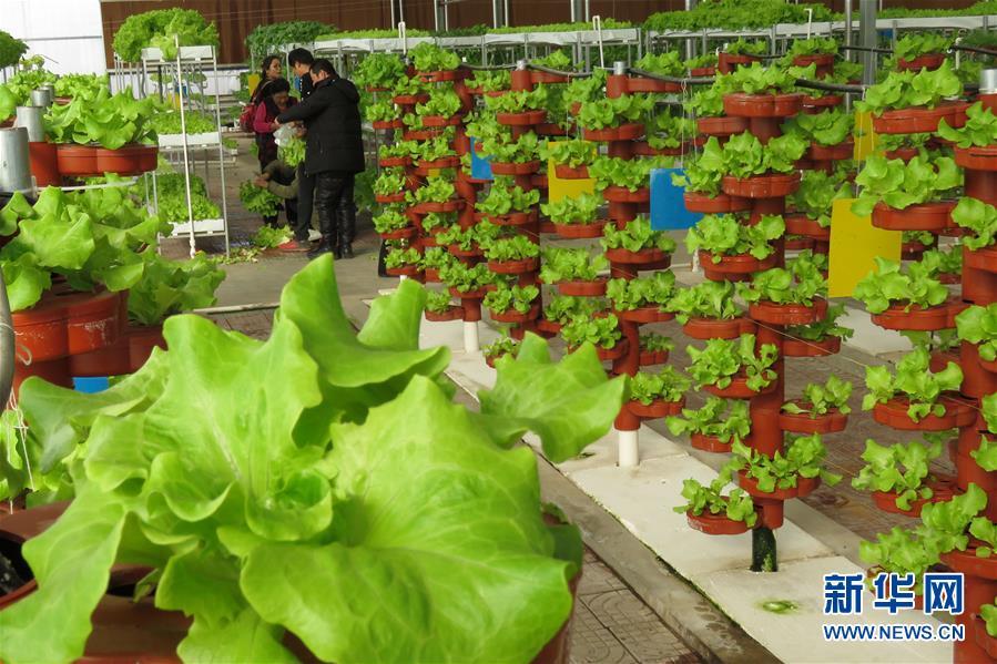 #(社会)(3)新疆哈密:农业园里春意浓