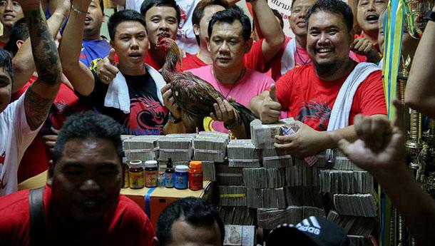 泰国斗鸡比赛奖金高达百万美元-创历史.jpg