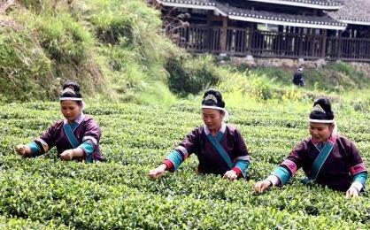 春茶.jpg