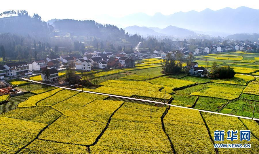 3月22日拍摄的汉中市勉县元墩镇元墩村盛开的油菜花(无人机拍摄).