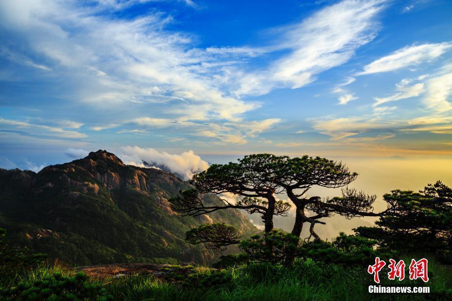 6月29日傍晚,安徽黄山风景区雨后出现云海和晚霞景观,宛如壮丽画卷.