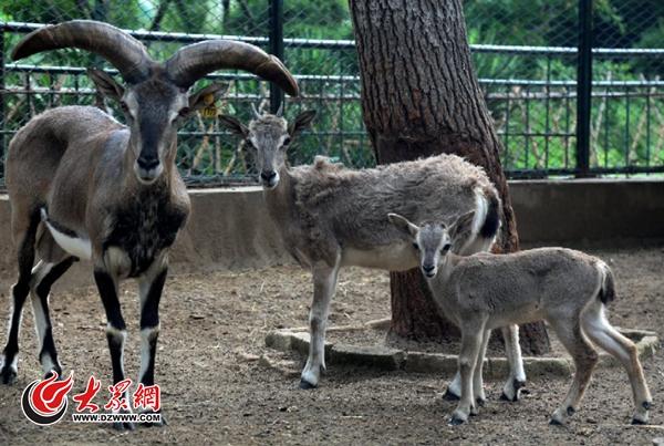 高萌组图!济南动物园新生小动物大盘点