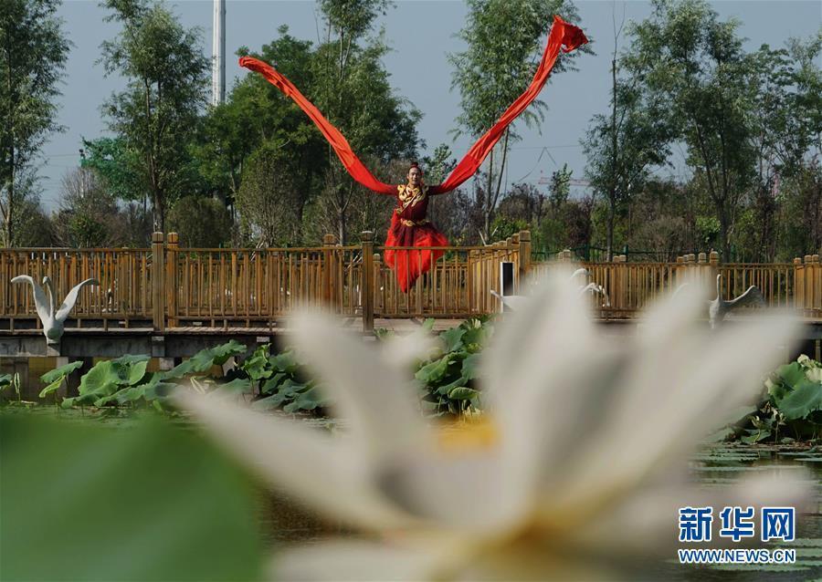 强图打榜 >> 正文    7月7日,演员在民权县任庄村荷塘栈道上表演.
