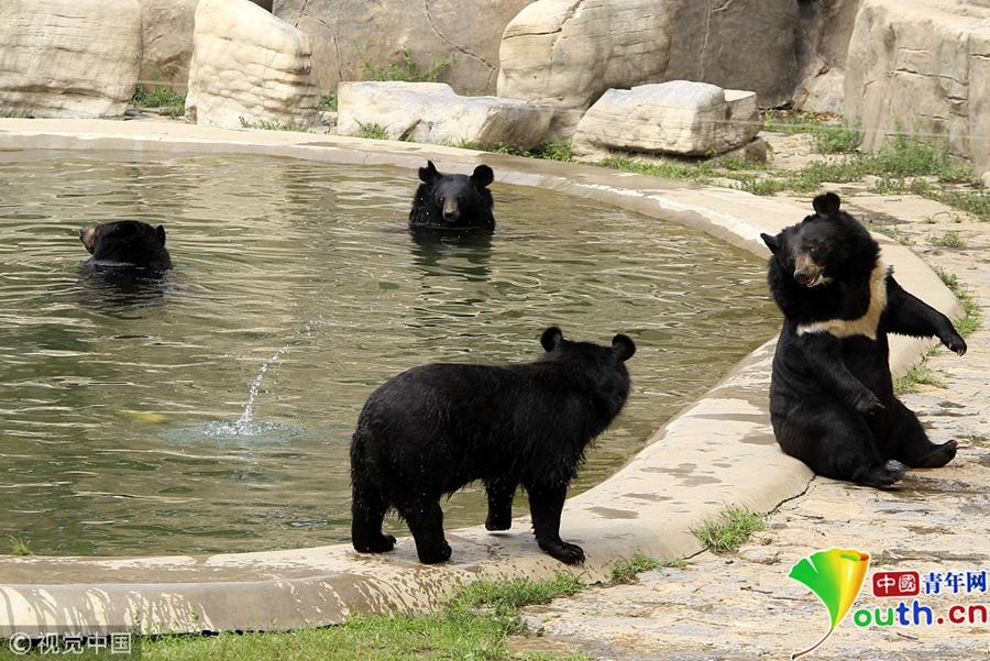 """炎炎夏日 动物园小动物避暑有""""凉方"""""""