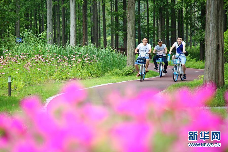 7月21日,游客在黄海国家森林公园骑行. 新华社发(陈暐 摄)