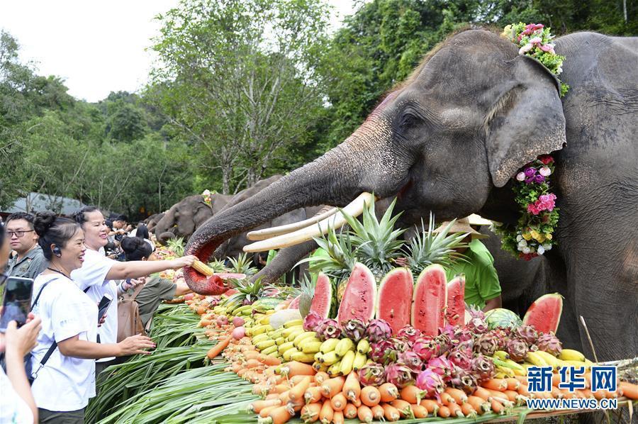 8月12日,大象在野象谷景区享用水果盛宴。   当日是世界大象日。云南省西双版纳傣族自治州野象谷景区举行世界大象日活动,包含大象巡游、大象水果盛宴、救助象羊妞生日会等多项内容。   新华社发(谢子艺 摄)