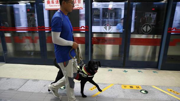 """西安首只导盲犬将服役-进入地铁""""特训"""".jpg"""