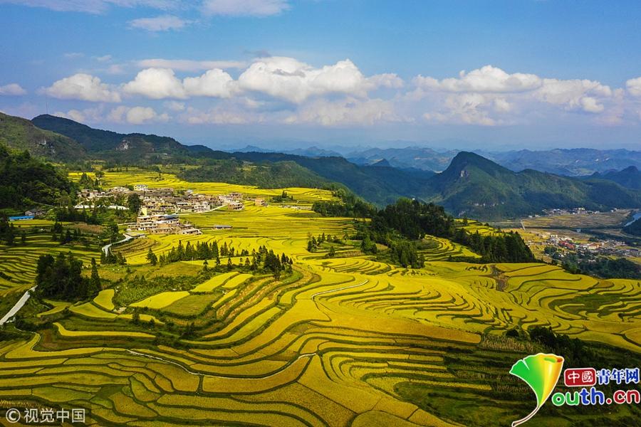 贵州省黔南依族苗族自治州贵定县沿山镇腊利村拍摄的金色梯田.