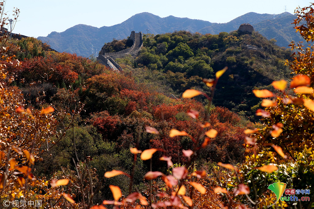 2018年10月12日,北京,八达岭森林公园红叶俏.