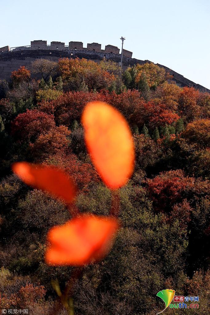 八达岭森林公园红叶俏
