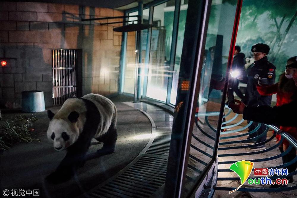 天津动物园再引进一只大熊猫