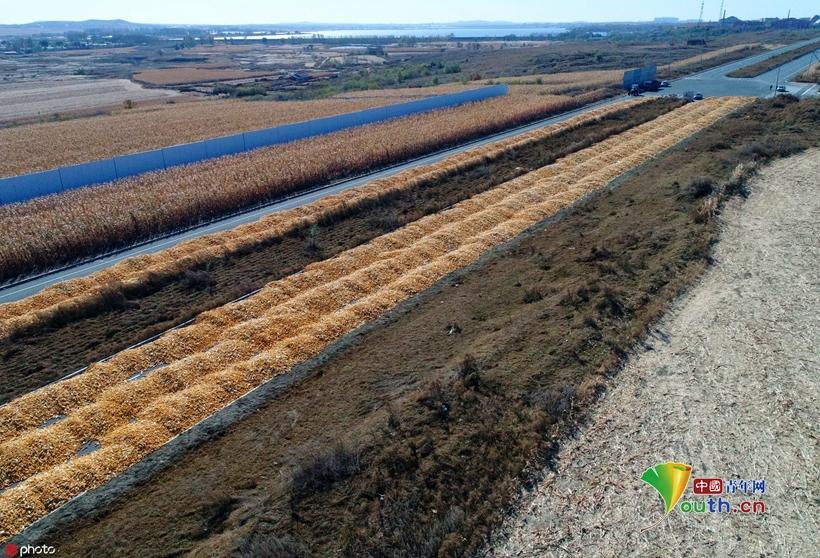 """農民馬路上曬秋收 長達2公里如一條""""黃金車道"""""""